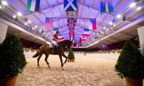 Dutch Sport Horse Sales