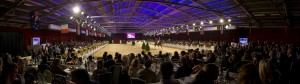 Dutch Sport Horse Sales horse event paardenevenement veiling