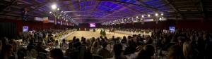 Dutch Sport Horse Sales DSHS Weert veiling Equine MERC