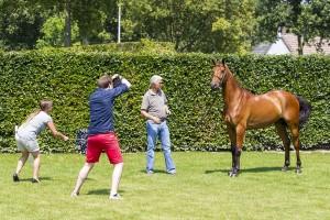 Luc van Moorsel fotografie Dutch Sport Horse Sales Emile Hendrix