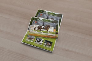 Platinum Stable advertentie advertisement horses marketing events