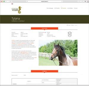 Website Stoeterij Vissers fokkerij breeding