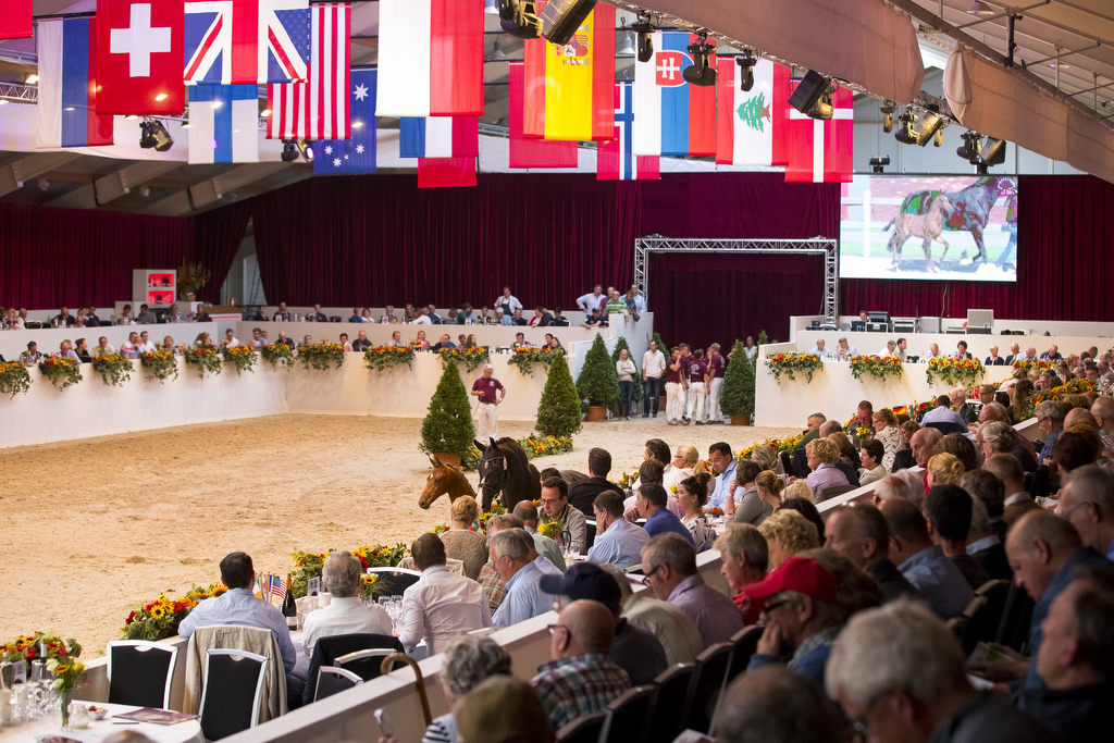 Limburg Foal Auction