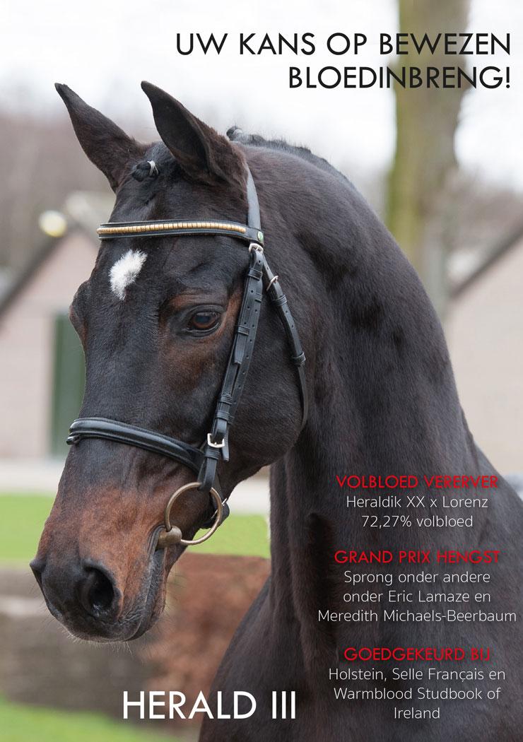 Flyer Verhagen Horse Service