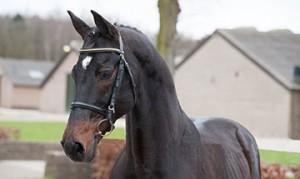 Verhagen Horse Service Harold flyer drukwerk paarden springen