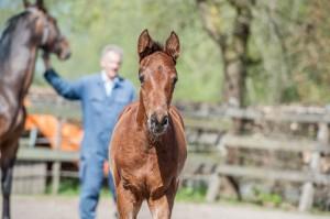 Veulens fotograferen Stoeterij Vissers marketing paarden