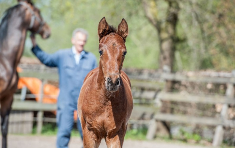 Foal photography at Stoeterij Vissers