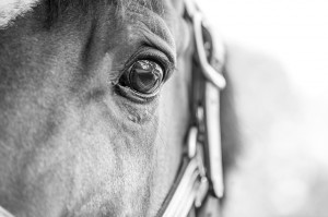 Google optimalisatie paardensite website hippisch marketing