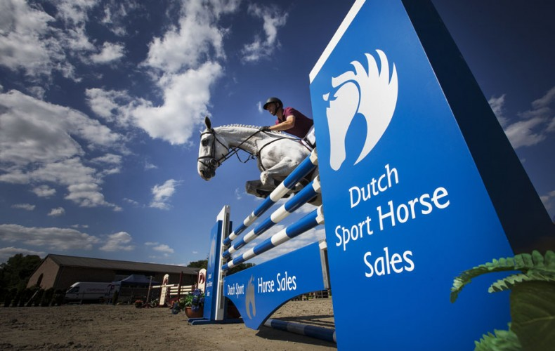 New website Dutch Sport Horse Sales online