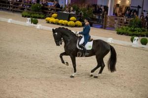 dressage, horses, tommie visser, equine merc, grand prix, world dressage masters