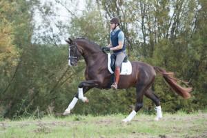 horses, dressage, werkendam, laurens van lieren, paarden, dressuur, fotodag, website, paardensport, grand prix, selevia hoeve