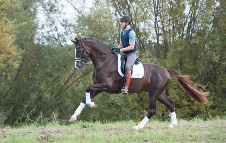 Photoshoot Laurens van Lieren Dressage