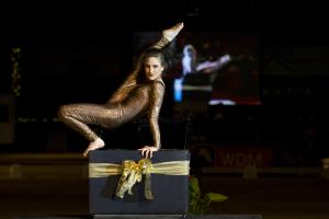 dressuurpaarden, veiling, auktion, auction, dressage