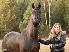 Versterking voor Equine MERC