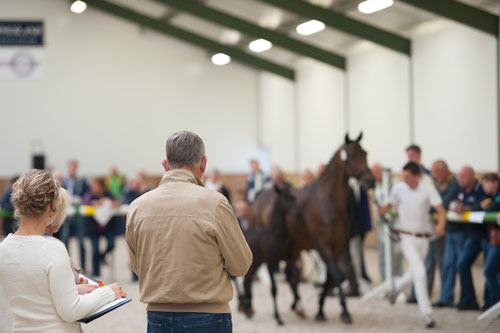 paardenmarketing, veulenveiling, marketing
