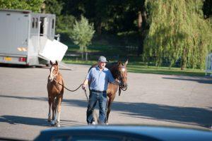 paardenmarketing, veulenveiling