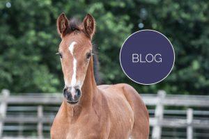 Veulenveiling-Marketing-Paarden-05