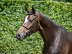 10 tips om je paard perfect op de foto te krijgen
