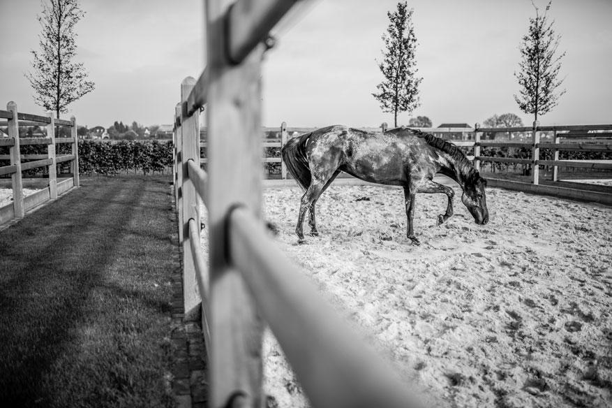 Fotodag Hendriks Sporthorses